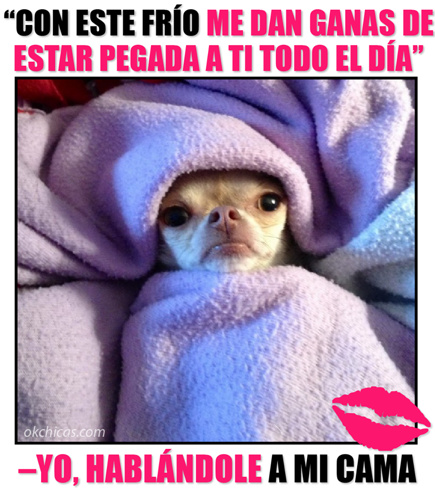 12643030 1055770564498250 8664567407824850847 N Png 856 960 Funny Animal Pictures Funny Animal Memes Chihuahua