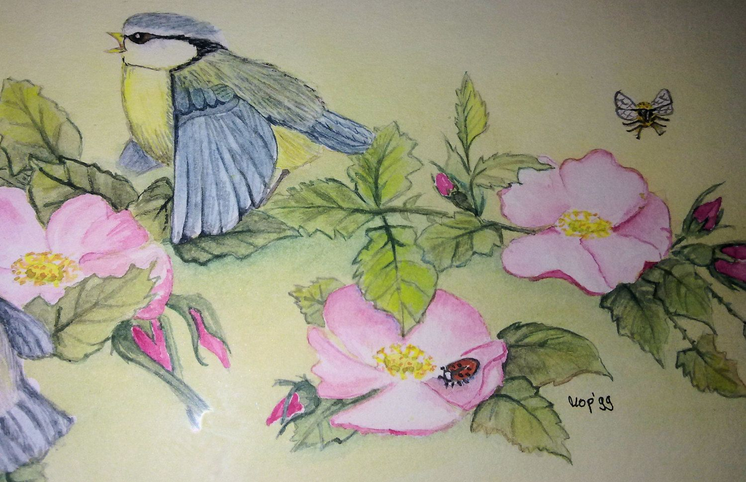Watercolor 'blue tit on rosehip'