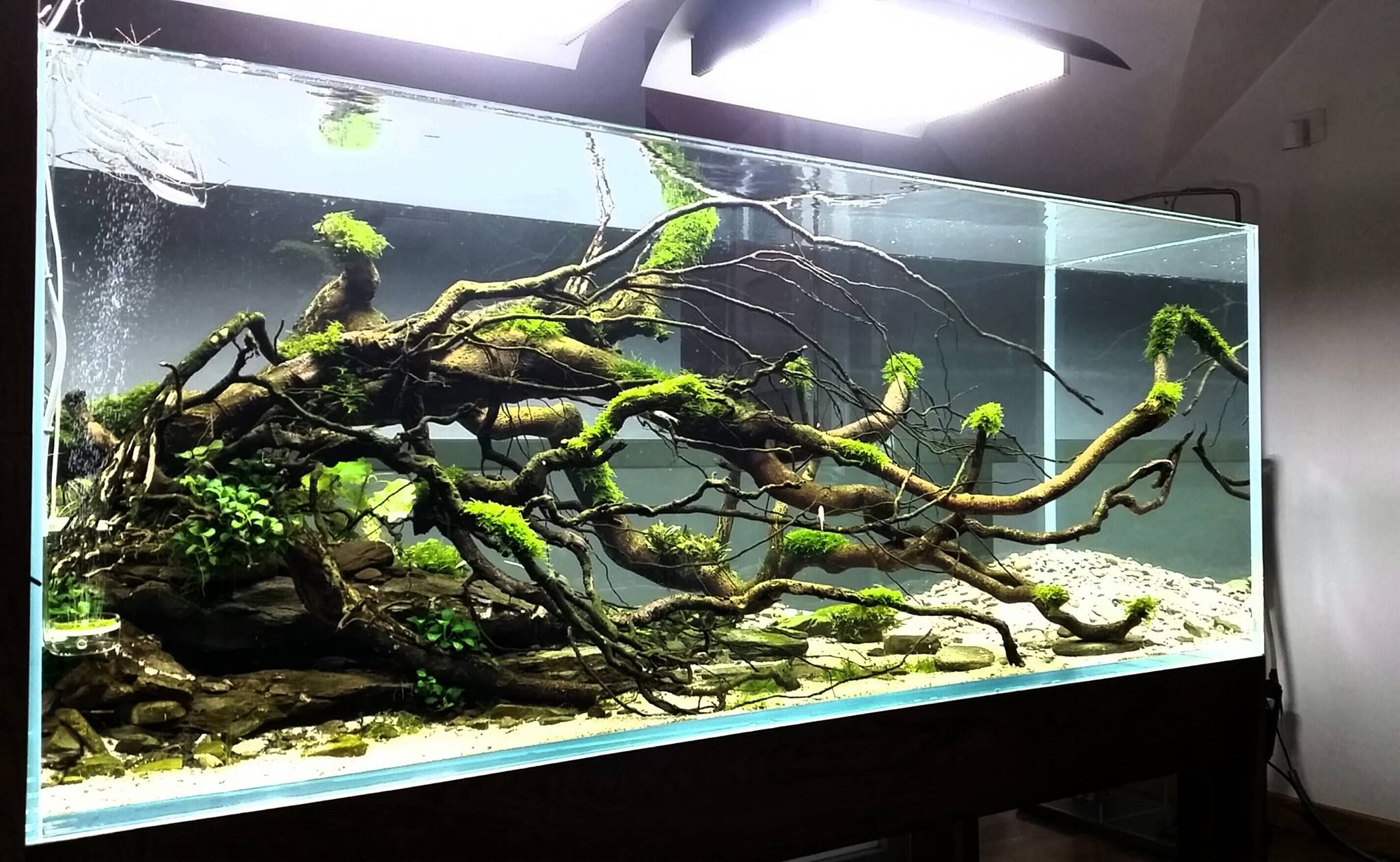 Stone Idea Aquascape Stone Aquascape Pinterest