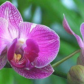 phalaenopsis orchideen regelm ig schneiden und umtopfen pflanzen pinterest orchideen. Black Bedroom Furniture Sets. Home Design Ideas