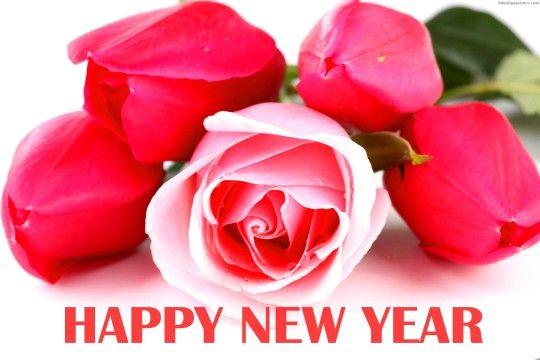 rose flowers on happy new year 2016 hd wallpaper 05769hd wallpapers picpictures