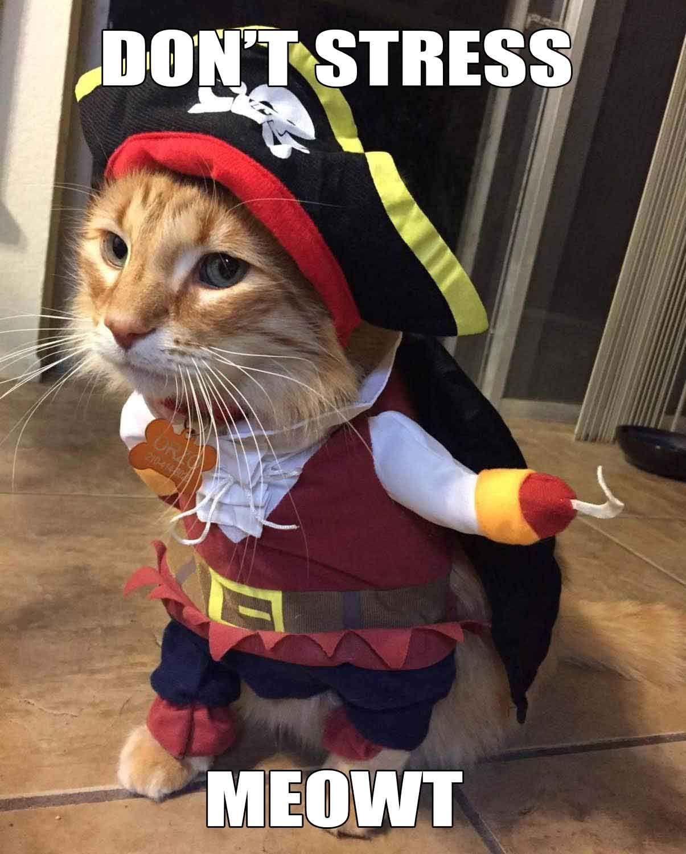 Cat Pirate Costume Funny Cat Costume Geeky Gift Ideas Cat Halloween Costume Cat Halloween Costume Pet Pet Halloween Costumes