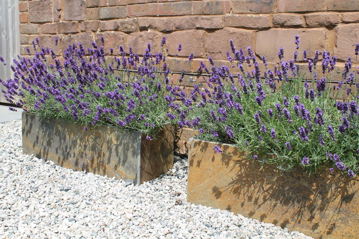 Lovely Lavender In These Planters English Garden Planter Lavender Garden Cottage Garden Plants