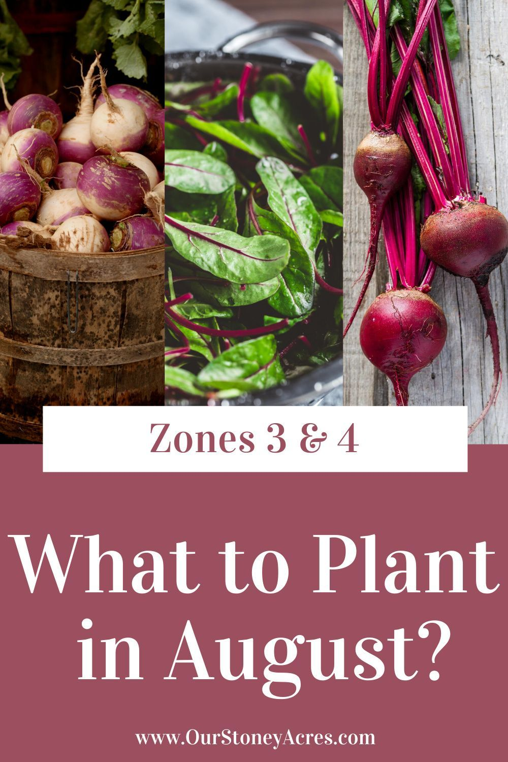 What To Plant In August Zones 3 4 When To Plant Vegetables Fall Garden Vegetables Food Garden