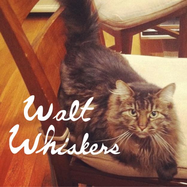 25 Literary Pun Names For Your Cat Cat Puns Cats Pun Names