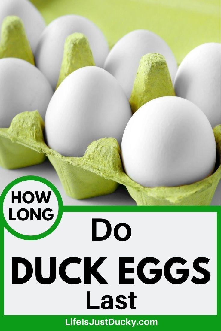 Duck Eggs Vs Chicken Eggs Why Duck Eggs Are Better Duck Eggs Chicken Eggs Feeding Bees