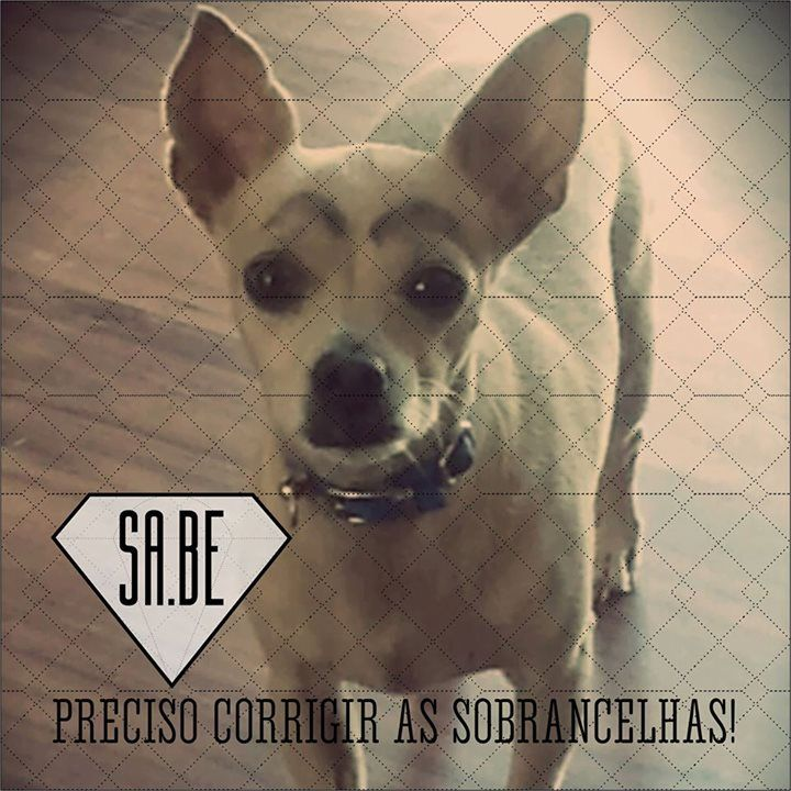 #cute #dog   www.facebook.com/sabeconhecimento