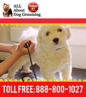 Best Online Pet Dog Grooming Schools Pet Groomers Dogs Dog Grooming