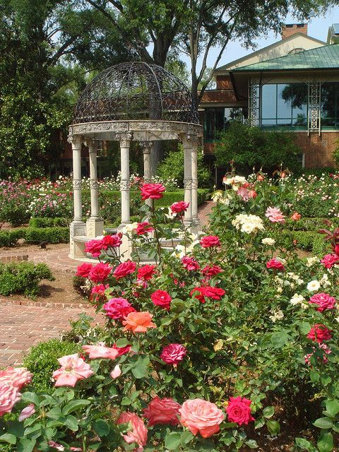 Rose Garden at Furman University is part of Backyard Rose garden - Explore A Local Folkus' photos on Flickr  A Local Folkus has uploaded 2730 photos to Flickr