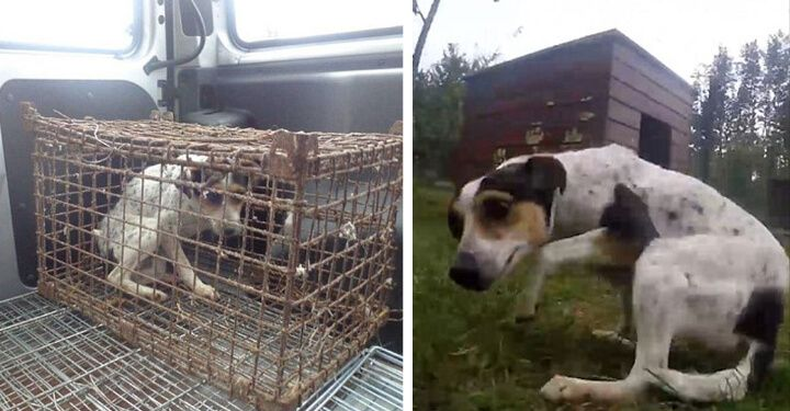 Dog Was Confined To A Cage His Whole Life Now Watch When She Runs