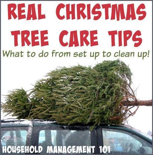 Real Christmas Tree Care Tips From Set Up To Clean Up | Real ...