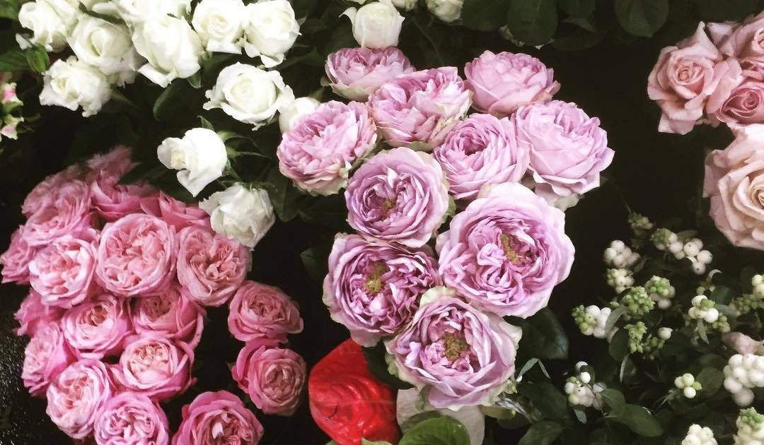 10+ Download Gambar Bunga Mawar Pink