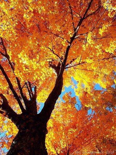 entwife #autumnfoliage