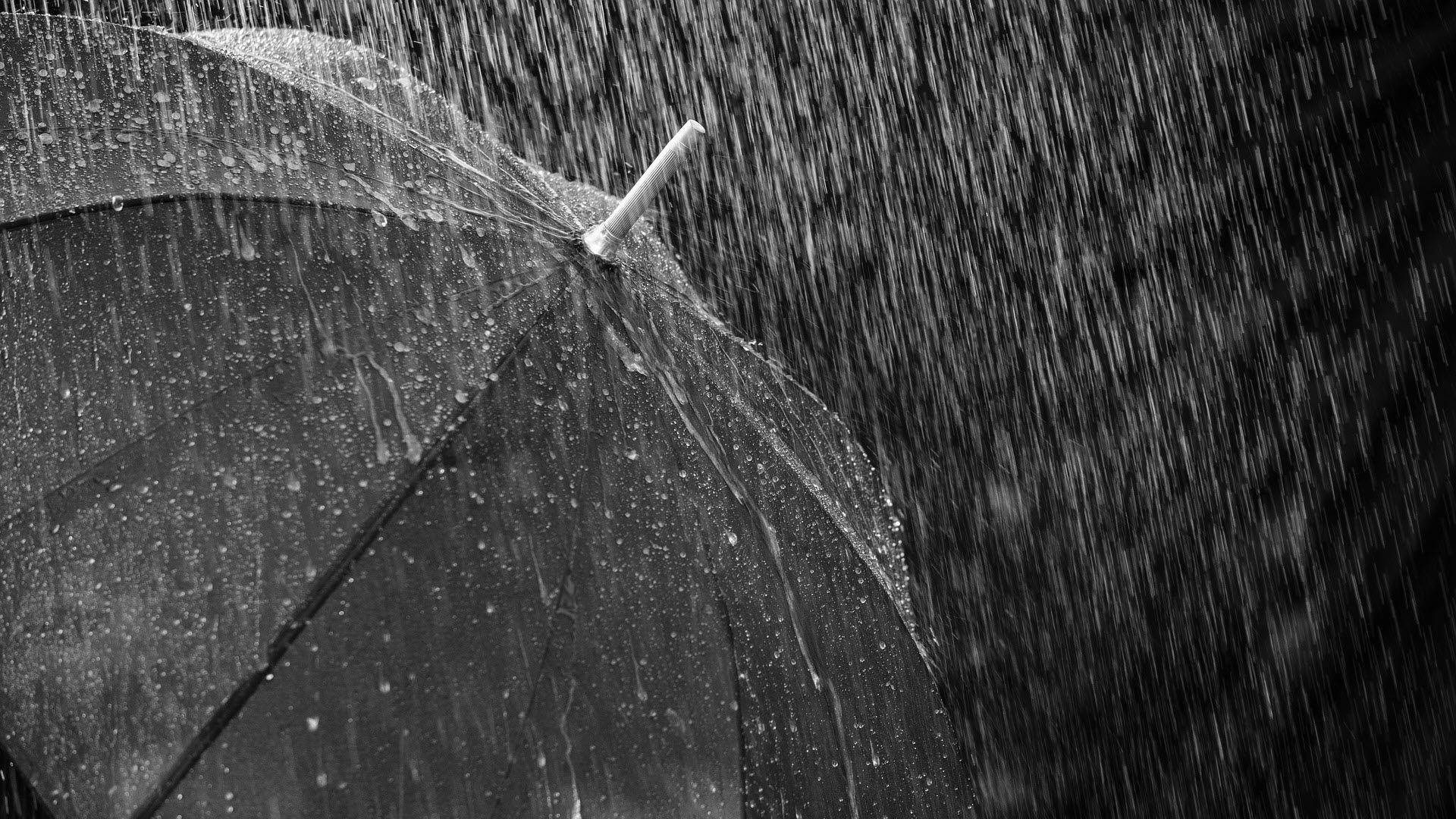 Download FREE Rain Wallpapers Rain wallpapers, Rain and