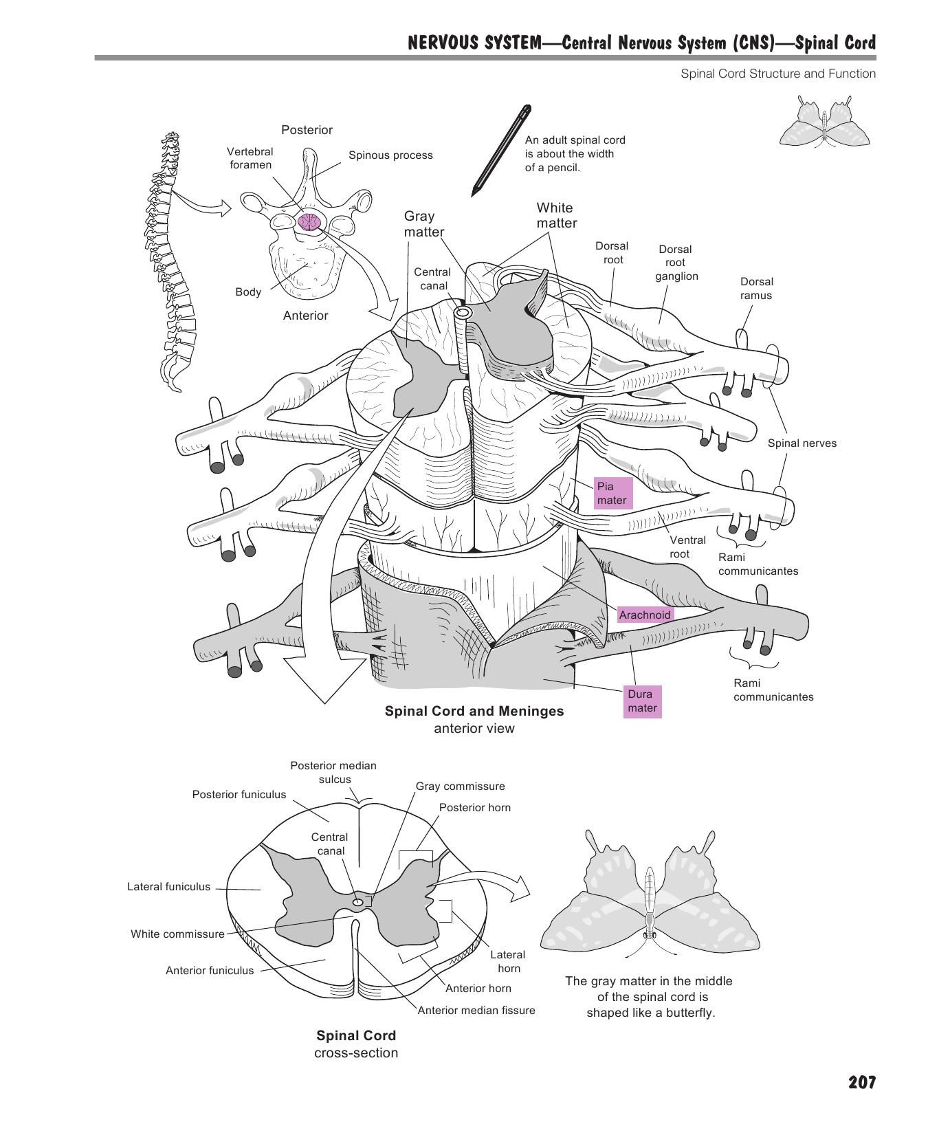 A Visual Analogy Guide to Human Anatomy and Physiology | Education ...
