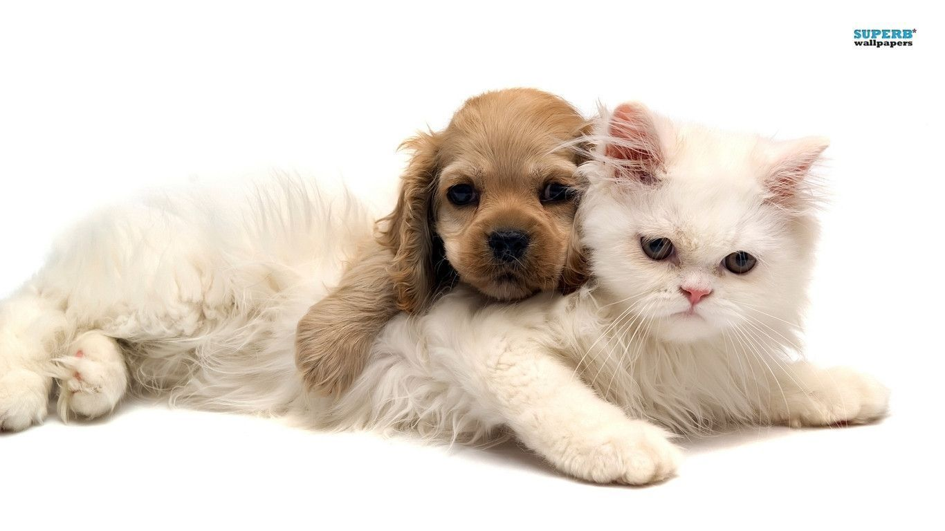 Kitten And Puppy Wallpapers For Iphone Cute Cats And Dogs Baby
