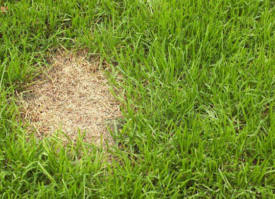 Solved What To Do About Brown Grass Grass Seed Lawn Care Tips