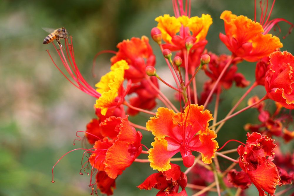 Desert Flower Names Orange Desert Flower And A Bee Arizona