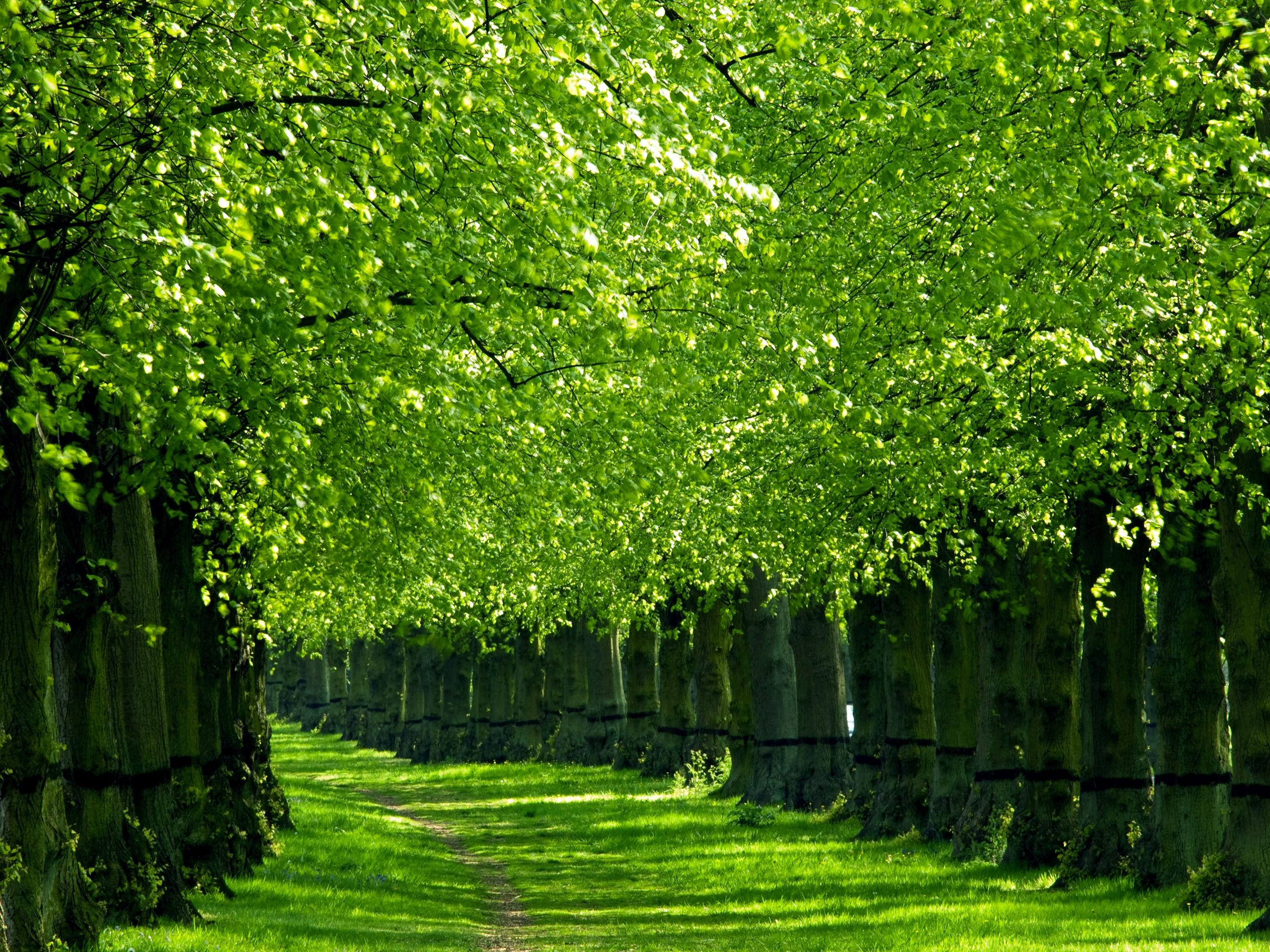Fantas Tigers Green Alley Trees AmZing Pinterest