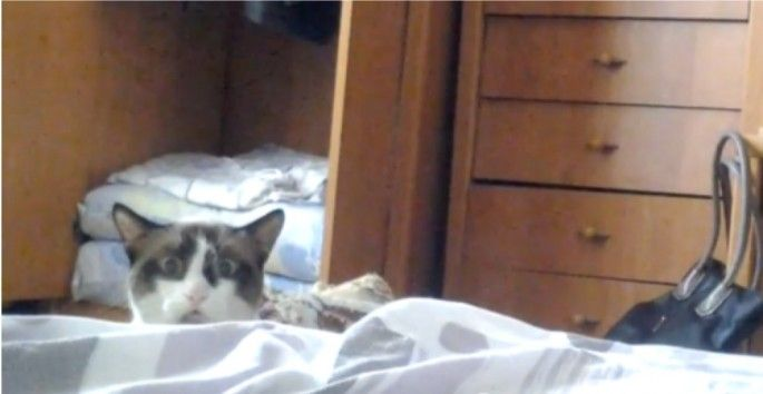Whatever is on the bed has shocked this cat beyond words…but she can't turn away.