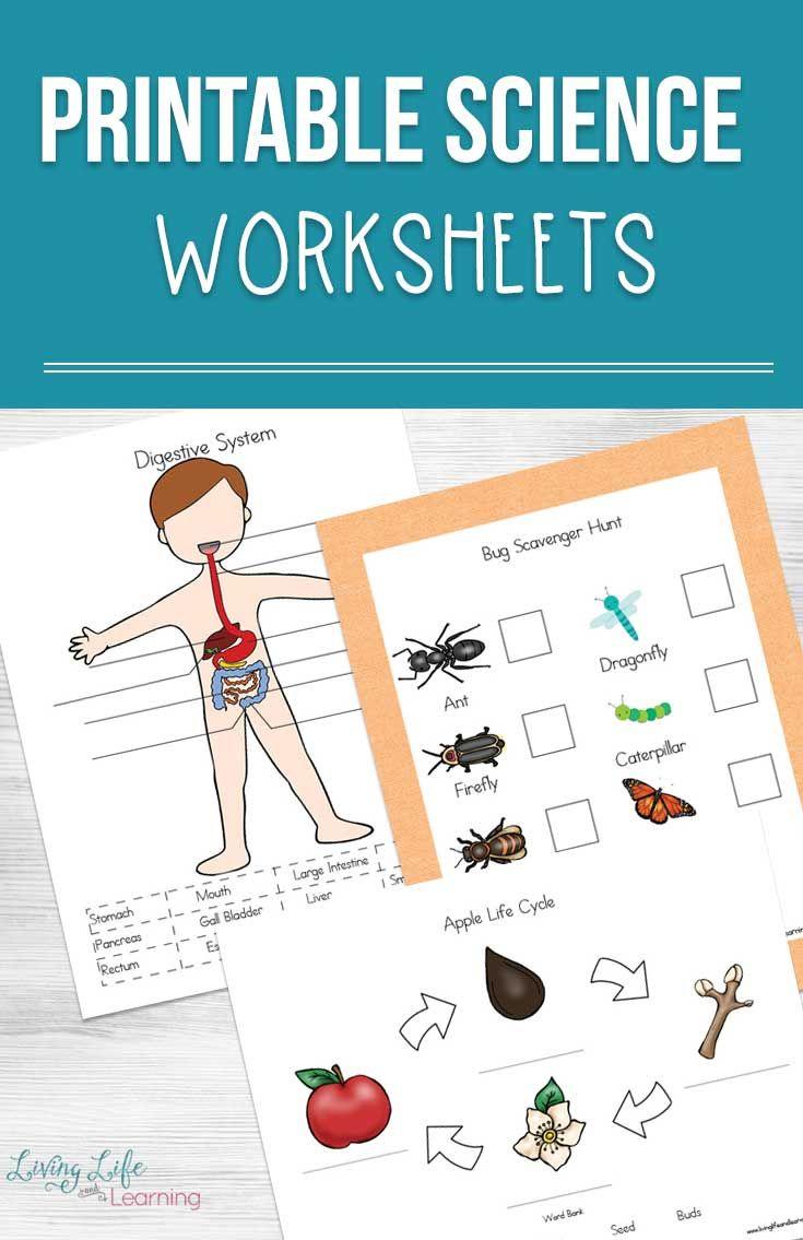 Printable Science Worksheets for Kids Homeschooling