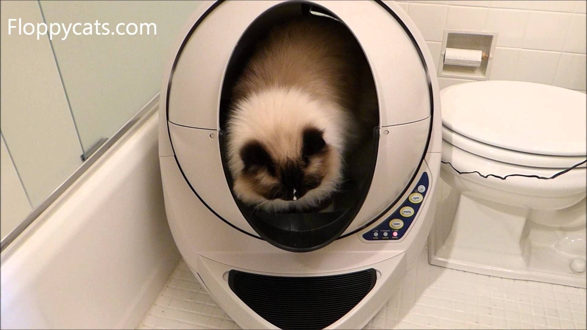 Litter Robot Open Air Review Automatic Self Cleaning Litter Box