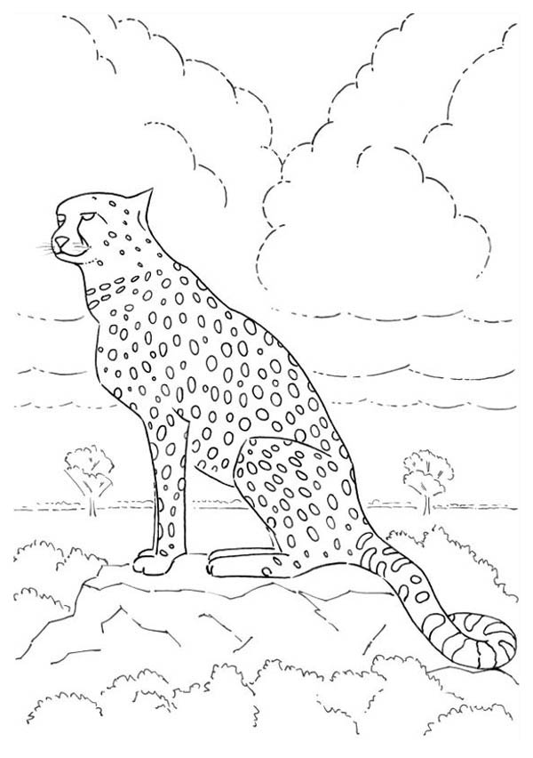 Pin By Netart On Cheetah Coloring Pages Coloring Pages Coloring Pictures Cheetah