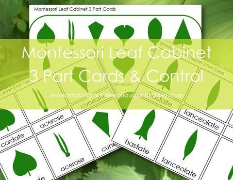 1 Set Plant Shape Puzzles Montessori Botany Material Kids Educational Toys