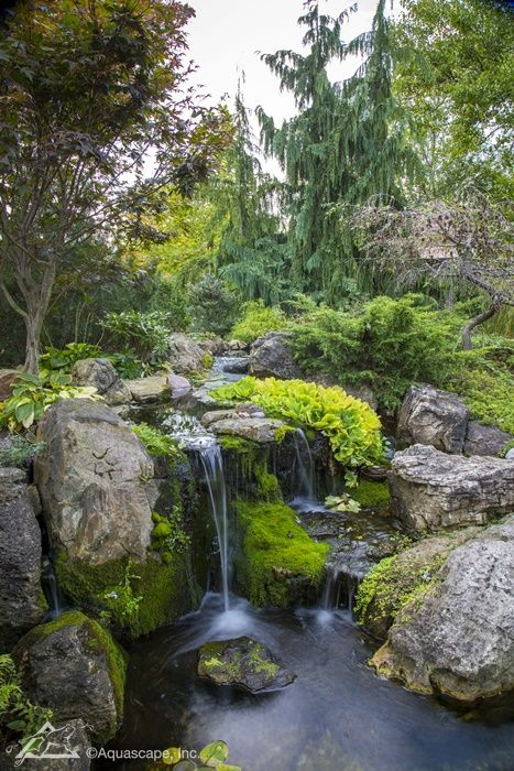 Inspiration from Our Lead Designer's Backyard Pond | Aquascape, Inc.