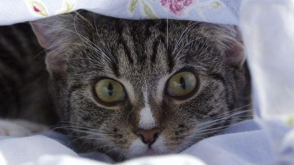 Warum Katzen schmollen