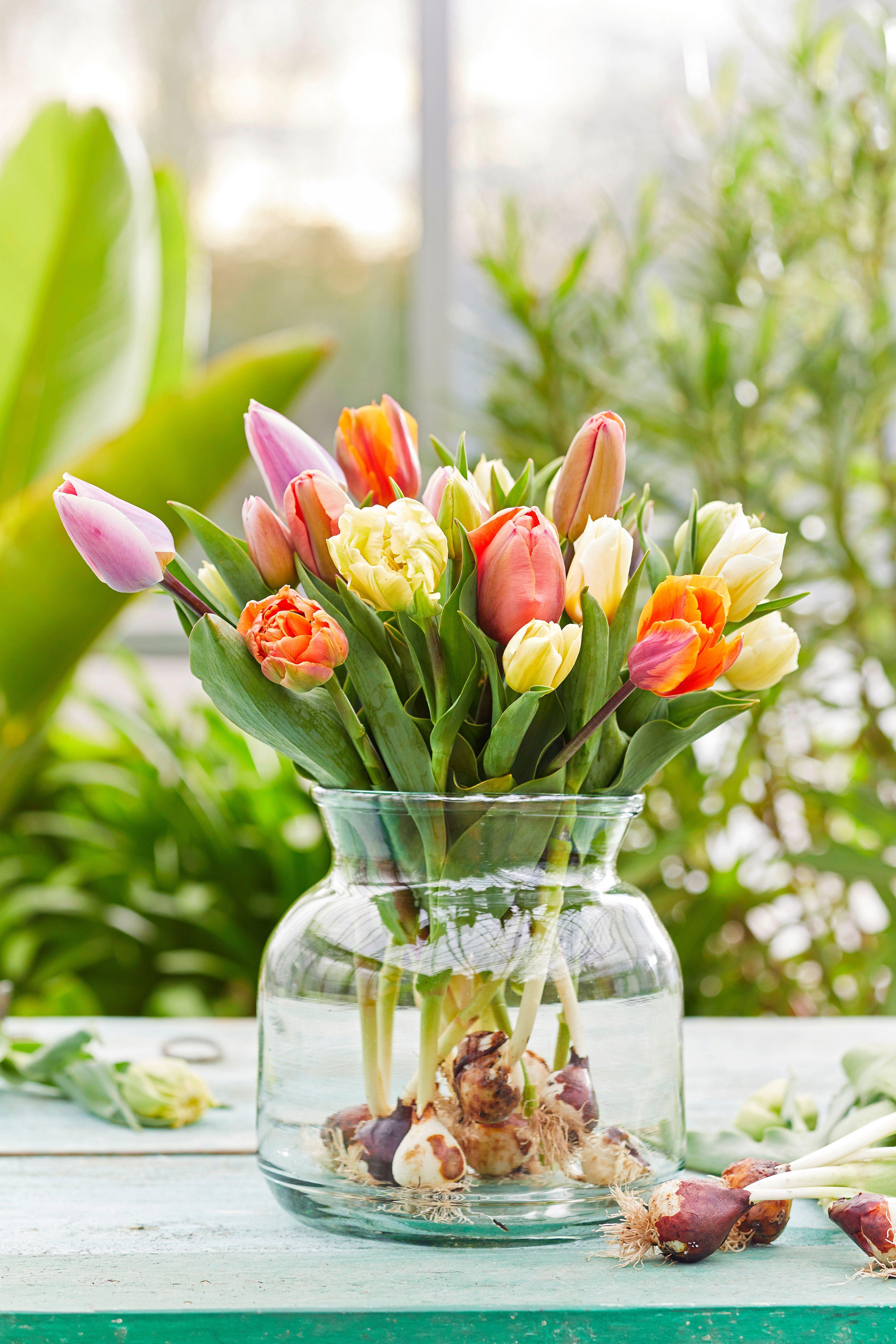 Bunte Tulpen Sind Nicht Nur In Deinem Garten Ein Echter Hingucker Sondern Eignen Sich Auch Super Als Deko Fur Dein Grunes Zuh Tulpen Dekoration Wunderschon