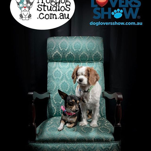 Day 3 Melbourne thedogloversshow with Lilly and Peanut