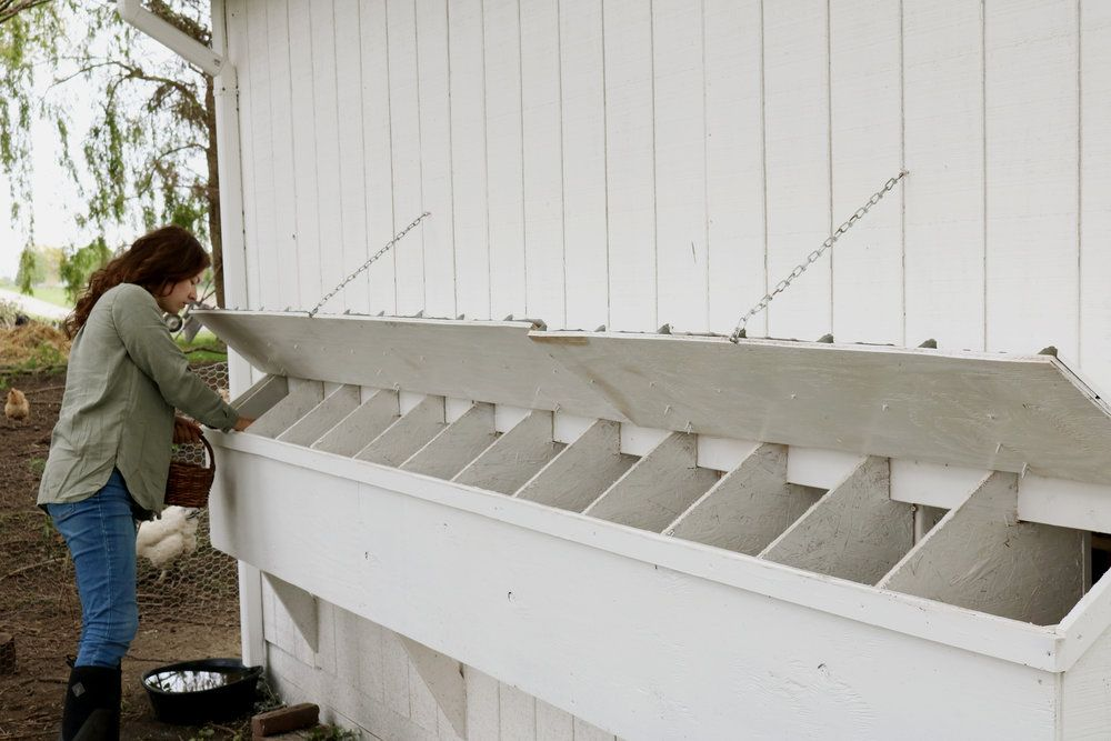 How We Built Our Chicken Coop Under A Tin Roof In 2020 Coop Chicken Coop Barn Siding