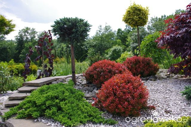 Iglaki berberysy kamie w ogrodzie trzmielina na pniu for Gartengestaltung joanna