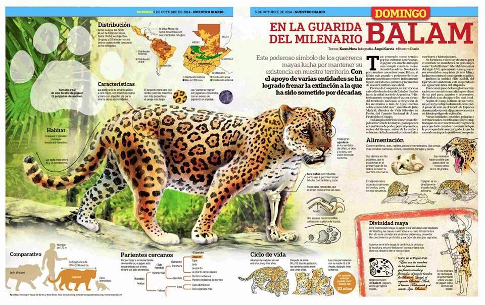 """Infografía: """"En la guarida del milenario Balam. Nuestro Diario de Guatemala, gráfico de Ángel García. (vía Daniel Lux)."""