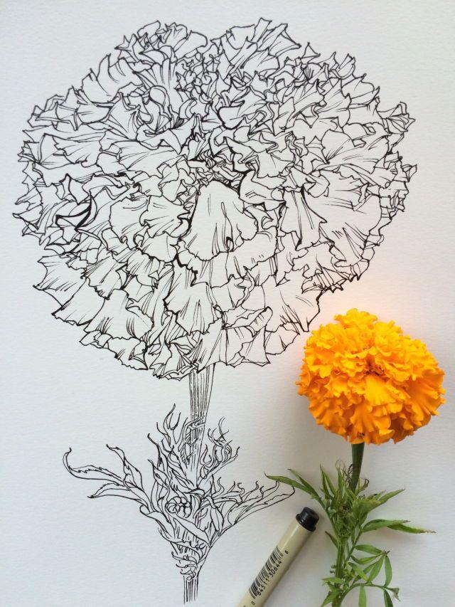 Beautiful Drawing Dibujo De Flor Flor Cempasuchil Dibujos