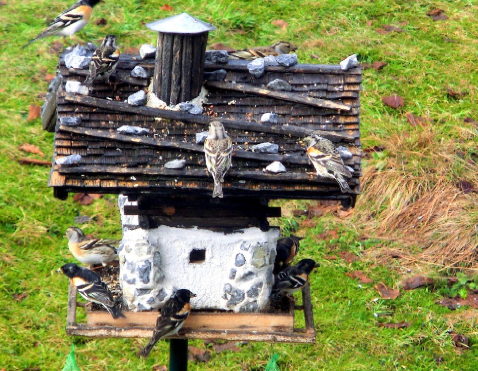 Handgefertigte Vogelhäuser im Tiroler Alpenstil