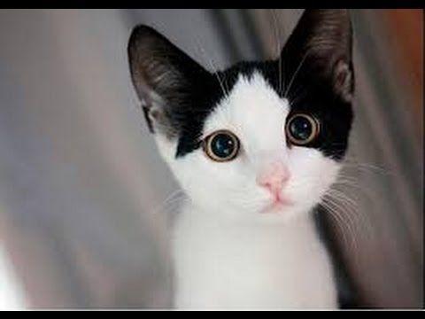 tom cat 2 saying prayer