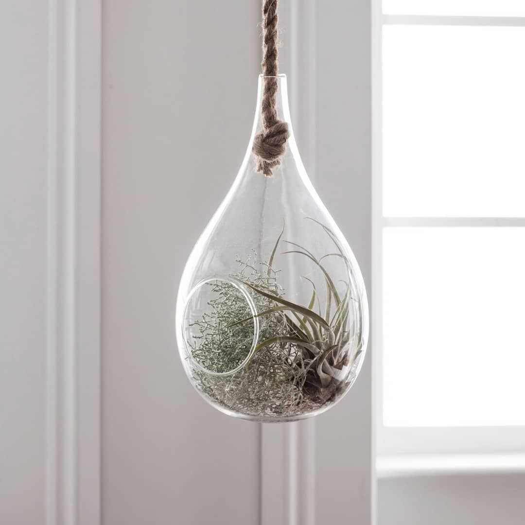 Add a unique focal point to your home with this teardrop terrarium