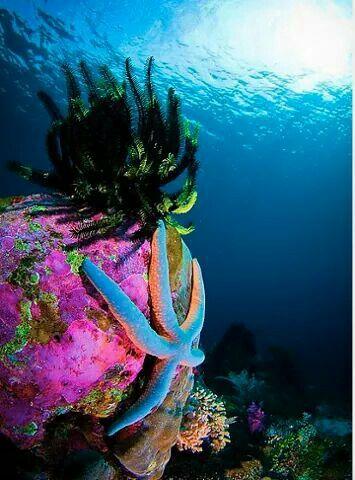 Under the sea ⚓