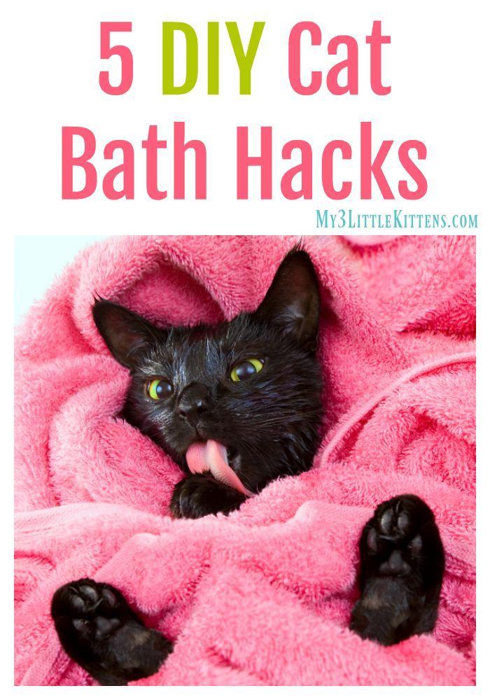 5 Diy Cat Bath Hacks Cat Bath Cat Diy Cat Care