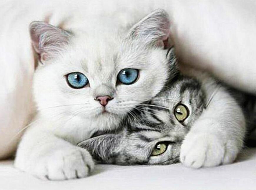 Cuddling Cat DIY Diamond Painting Cats, Animals, Cute cats