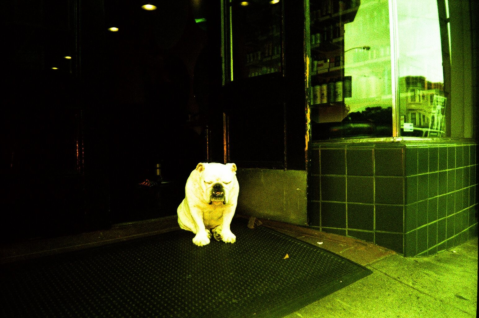 San franciso dog shot on a Lomo multisplash- by KB