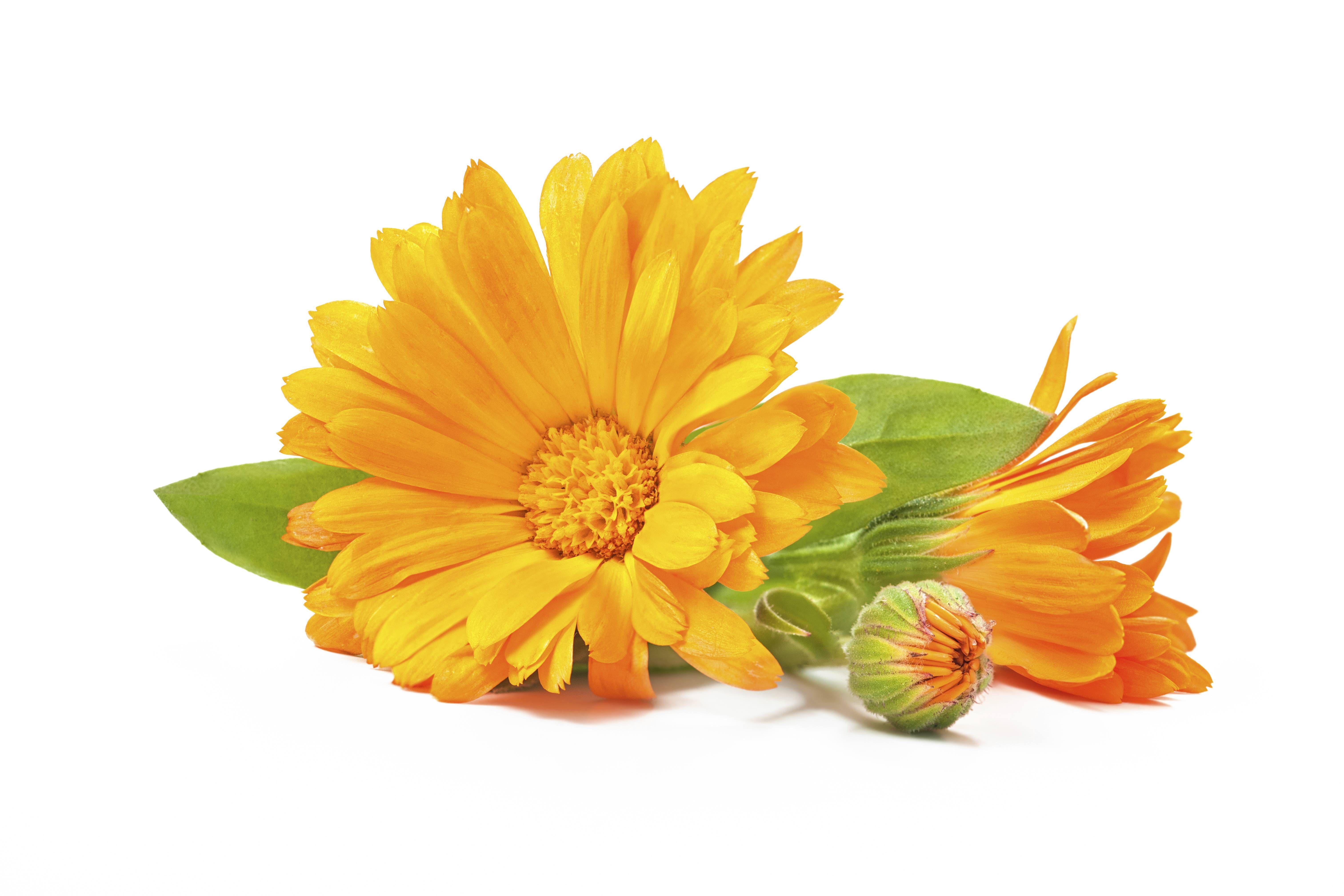 puremedy Calendula, Calendula oil, Organic skin care