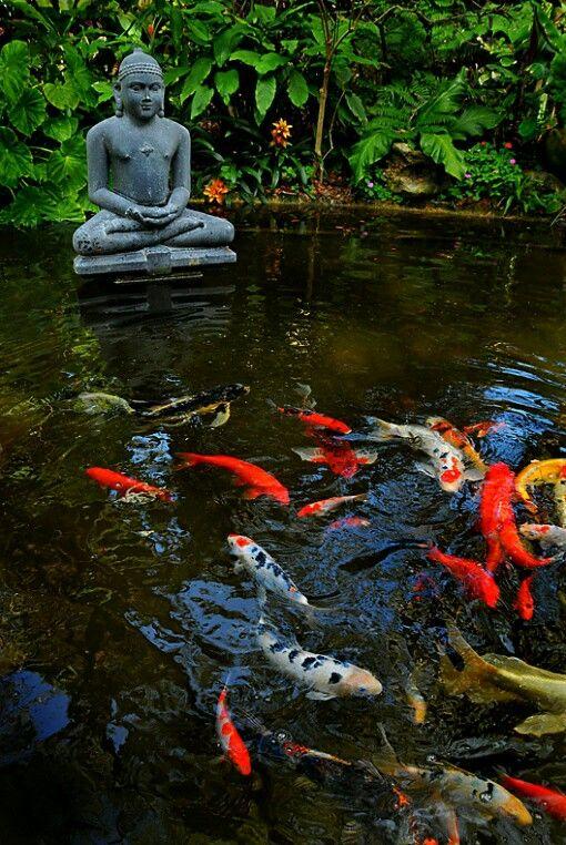 Buddha jardin zen om meditacion japanese pinterest for Koi pool water gardens thornton