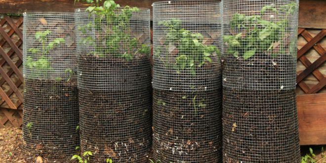rendements records avec la tour pommes de terre jardin pinterest potager jardinage et. Black Bedroom Furniture Sets. Home Design Ideas