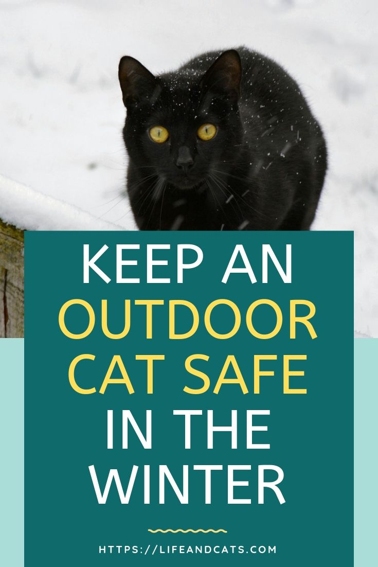 8 Tips To Keep Feral Cats Safe In Winter Feral Cats Outdoor Cats Cats