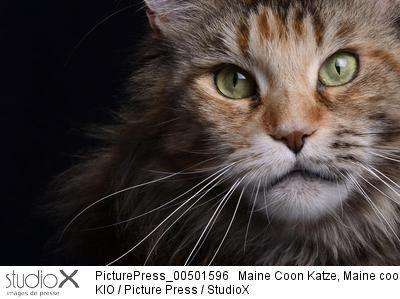 Kio/PicturePress/StudioX Chat portrait