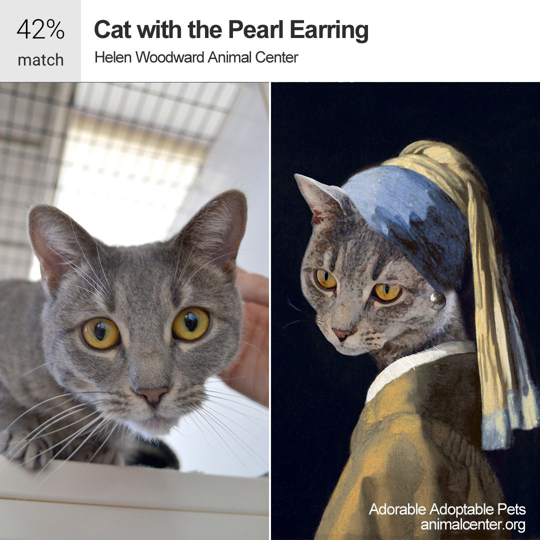 Cat & Kittens for Adoption in San Diego Kitten adoption