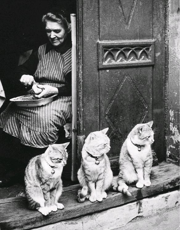 """"""" Toni Schneiders (1920 - 2006) Katzenmutter (Lübeck), 1950 Beschreibung: Kartoffelschälende Frau im Hauseingang, umringt von drei Katzen """""""
